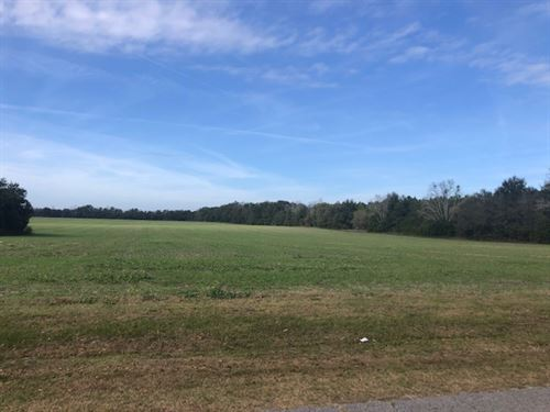 Nice 20 Acres : Live Oak : Suwannee County : Florida