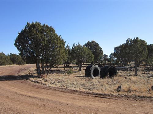 .25 Acres to Explore & Grow $99/Mo : Show Low : Navajo County : Arizona