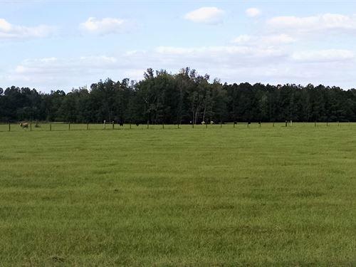 Old Hammond, Parcel : Loris : Horry County : South Carolina