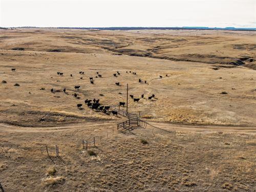 Station Gulch Ranch : Calhan : Elbert County : Colorado