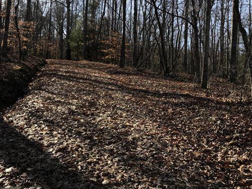 Kentucky Hunting & Timberland : Morehead : Rowan County : Kentucky
