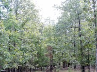 Ozark Mountain Acreage Timberland : Valley Springs : Marion County : Arkansas