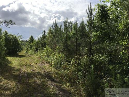 Ruffin 15 AC Timber / Hunting : Ruffin : Colleton County : South Carolina