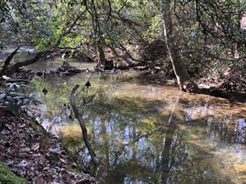40+/- Acres on Wedowee Creek : Woodland : Randolph County : Alabama