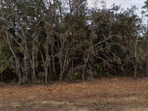 Large Wooded Lot For Tiny Home 313 : Florahome : Putnam County : Florida