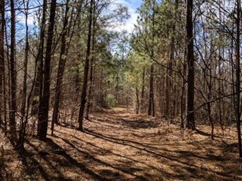 Napoleon Pines 18+/- Acres : Woodland : Randolph County : Alabama