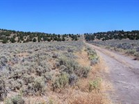 Fantastic Parcel, Trees, $299/Mo : Termo : Lassen County : California