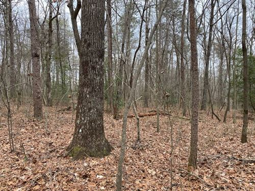33.55+/- Acres Beautiful Wooded : Coalmont : Grundy County : Tennessee