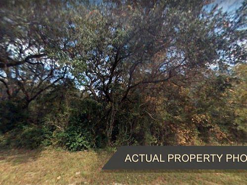 Densely Treed Property Near Creek : Lake City : Columbia County : Florida