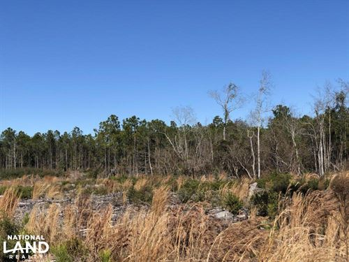 Cozy 5 Acre Homesite : Supply : Brunswick County : North Carolina