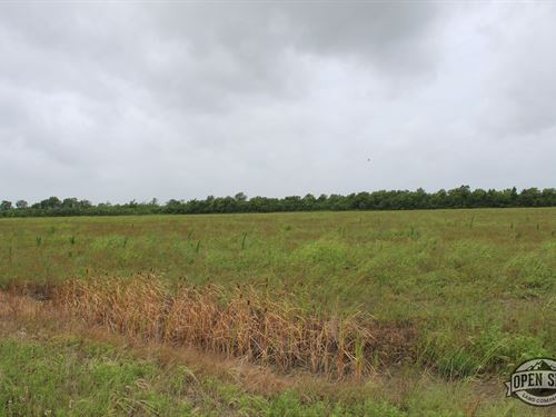 Happiness at This 1.07 Acre Land : Royse City : Hunt County : Texas