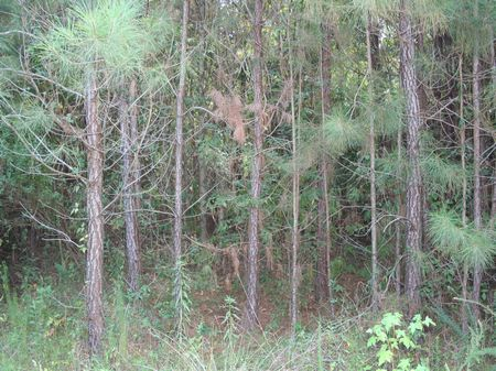 88 Acres Priced To Sell : Forest : Scott County : Mississippi