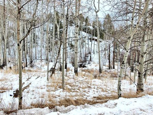 2 Acres Vacant Land Cripple Creek : Cripple Creek : Teller County : Colorado
