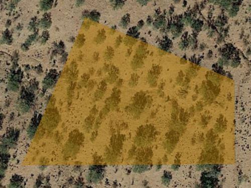 1+ Acre of High Desert Fun : Tucson : Pima County : Arizona