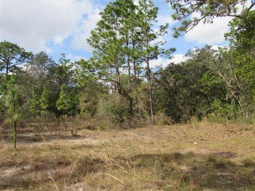 This Gorgeous 30.92 Acres Mol Kraus : Inverness : Citrus County : Florida