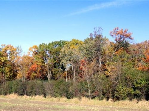Mature Wooded Building Site, Pond : Edgerton : Dane County : Wisconsin