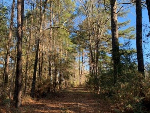 28 Acres In Lawrence County In Silv : Silver Creek : Lawrence County : Mississippi