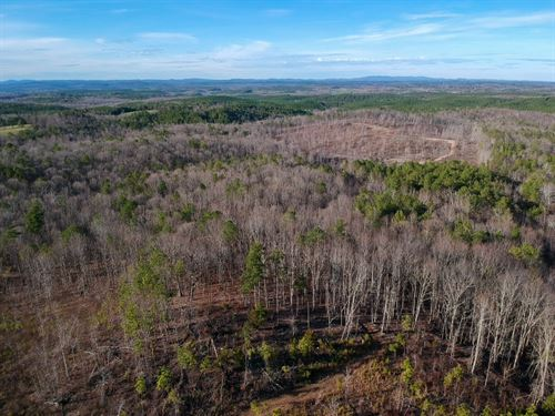 85+/- Acres Hunting/Timber Land : Cragford : Clay County : Alabama
