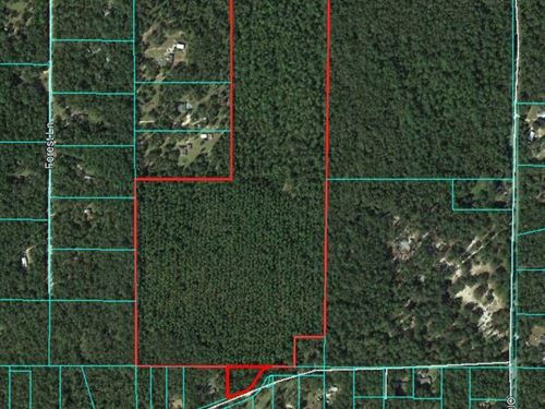 61.21 Acres Timberland : Crawfordville : Wakulla County : Florida