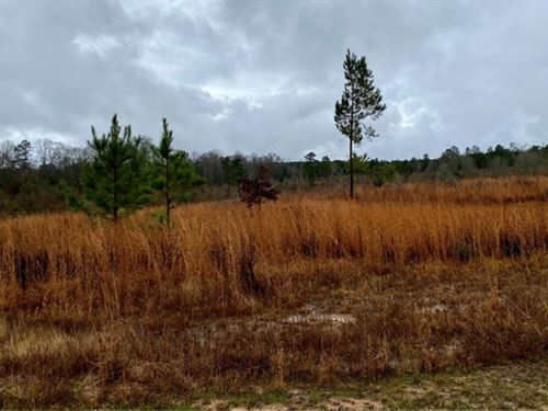 1.2 Acres In Lincoln County In Bogu : Bogue Chitto : Lincoln County : Mississippi