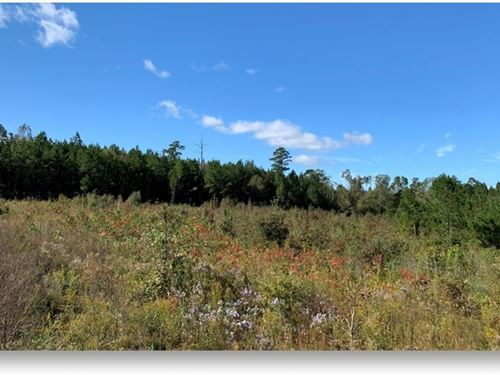 12 Acres In Lincoln County In Bogue : Bogue Chitto : Lincoln County : Mississippi