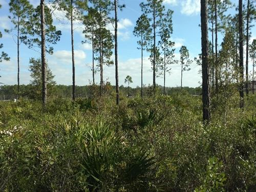 Highway Frontage 106 Acres Between : Olustee : Baker County : Florida