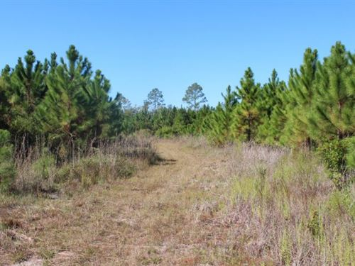 Creek & Timber Investment : Homerville : Clinch County : Georgia