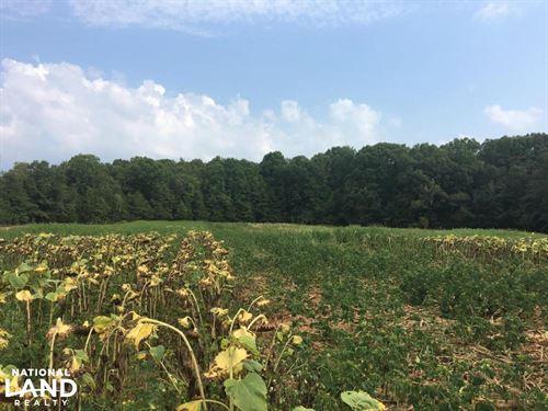 Hog Skin Hunt Club Share : Honea Path : Abbeville County : South Carolina
