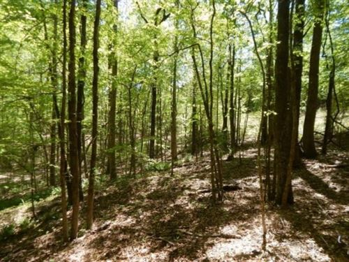 74.3 Acres In Carroll County In Car : Carrollton : Carroll County : Mississippi