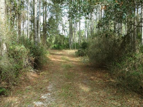 Secluded 160 Acres North Florida : Mayo : Lafayette County : Florida