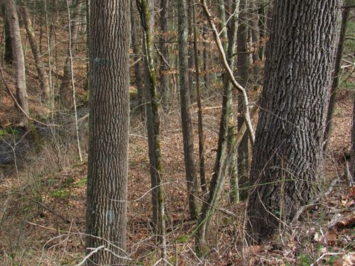 Wooded Building Lot Creek Abingdon : Abingdon : Washington County : Virginia