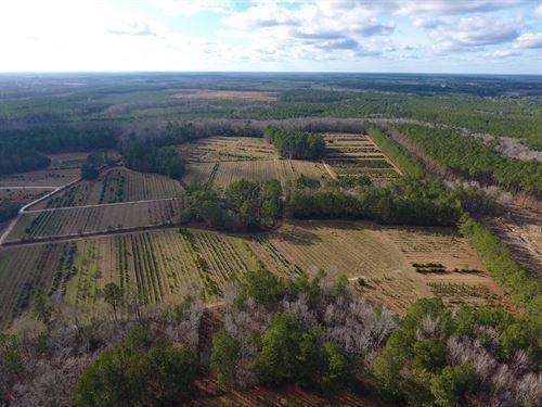 Wildwood Nursery West : Walterboro : Colleton County : South Carolina