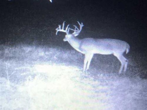 Big Deer 151, Poteau Mnt Arkansas : Hartford : Sebastian County : Arkansas