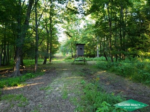 30 Ac, Pine Timberland With Home : Marion : Union Parish : Louisiana