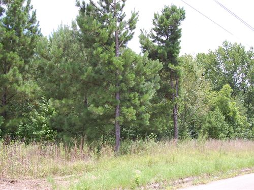 Large Residential Lot : Jackson : Hinds County : Mississippi