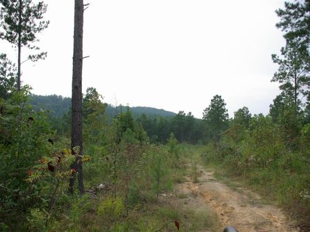 20+/- Acres - Pirvate Estate : Odenville : St. Clair County : Alabama