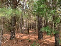 15.872 Wooded Acres : Taylorsville : Bartow County : Georgia