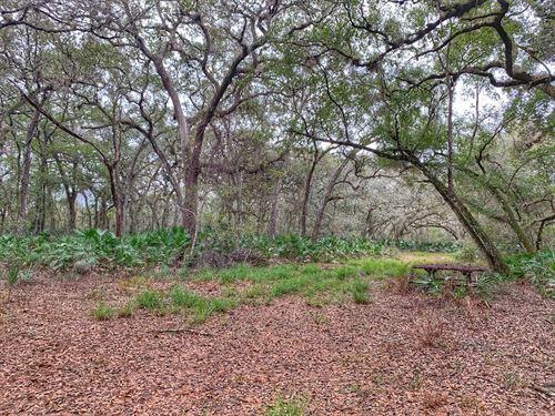 Slice of Heaven in Central Florida : Deleon Springs : Volusia County : Florida