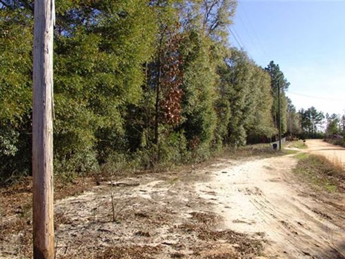 Wooded Lot Near Eufaula-$6000 : Eufaula : Barbour County : Alabama
