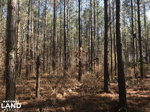 Columbus Hunting & Timber Treasure : Columbus : Lowndes County : Mississippi