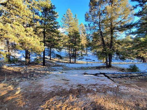 Land Mueller State Park, Florissant : Florissant : Teller County : Colorado