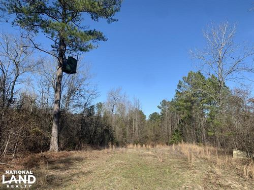 Jordan Creek Hunting Land : Laurinburg : Scotland County : North Carolina