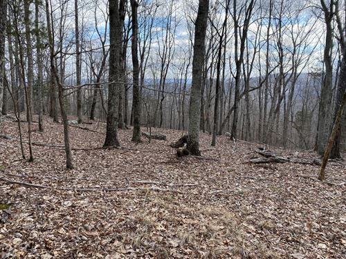240 ac Hunting Land : Scottsboro : Jackson County : Alabama