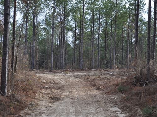 Outstanding Timber & Hunting Tract : Billingsley : Autauga County : Alabama