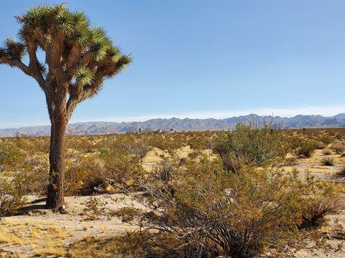 Joshua Tree Nice Corner Lot, $285/M : Joshua Tree : San Bernardino County : California