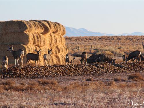 Amazing Wildlife All Around Blanca : Blanca : Costilla County : Colorado