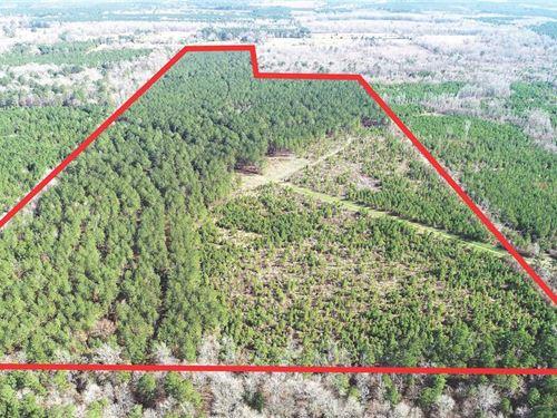 Plain Dealing Timber Tract, Bossie : Plain Dealing : Bossier Parish : Louisiana