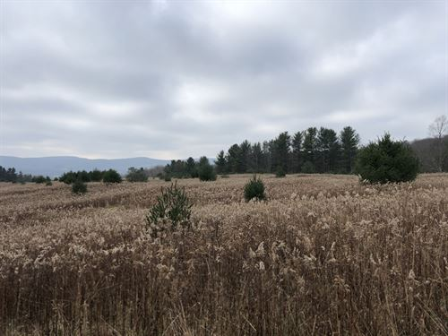 Southern Tier Hunters Dream : Cortland : New York