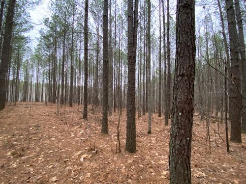 31+/-Acre Wooded Beautiful Property : South Pittsburg : Marion County : Tennessee