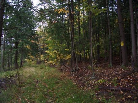 12.5 Acres Recreational Land : Orange : Schuyler County : New York